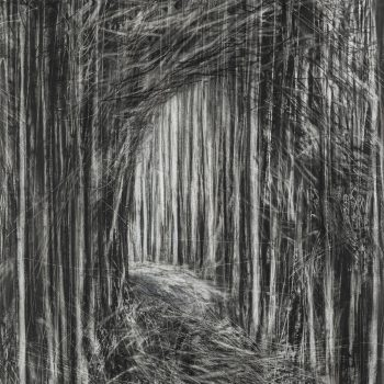 Path Through the Forest II by Janine Baldwin PS, Charcoal and graphite on paper