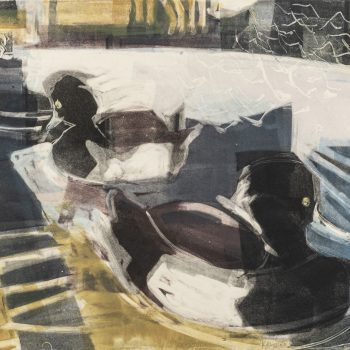 Tufted Ducks, Swans and Gulls by Kittie Jones, Monotype