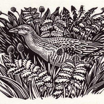 Corncrake in the Meadow by Richard Allen, Linocut print
