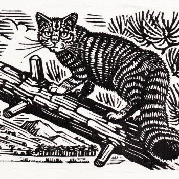 Scottish Wildcat by Richard Allen, Linocut print