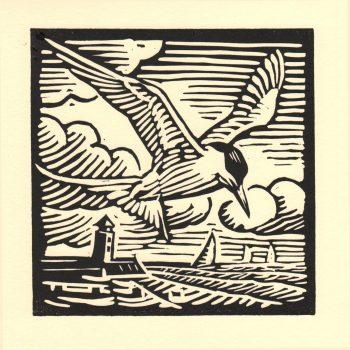 Common Tern by Richard Allen, Linocut print