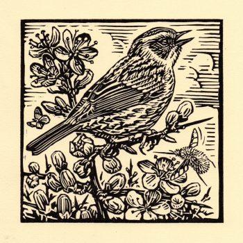Dunnock by Richard Allen, Linocut