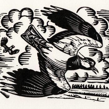 Lapwings Displaying by Richard Allen, Linocut print