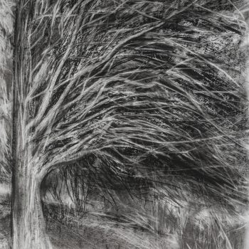 Tree at Val Saint-Martin by Janine Baldwin PS, Charcoal and graphite on paper