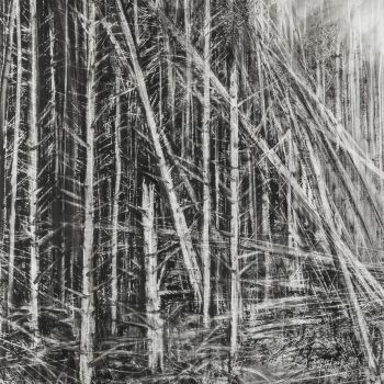 Deforestation by Janine Baldwin, Charcoal and graphite on paper