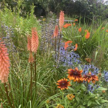 Tessa Pearson's garden border