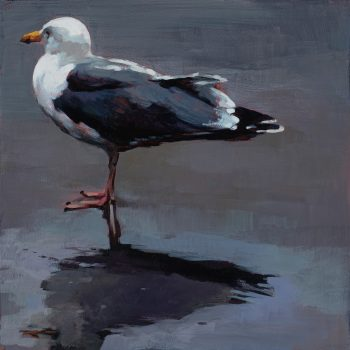 Seagull by Andrew Morris, Acrylic on board